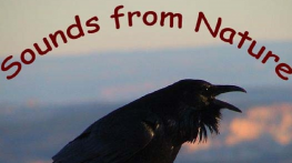 Sounds from Nature logo - raven cawing